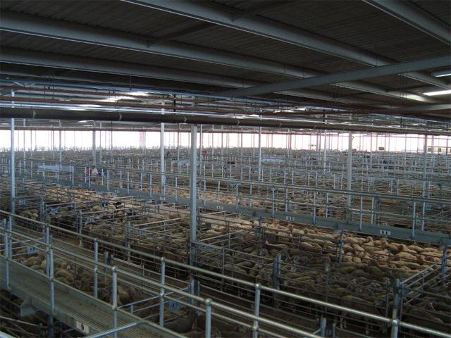 [Translate to englisch:] Saleyard in Australien