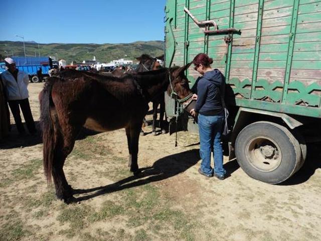 Tiermarkt Bni Hassan, Marokko