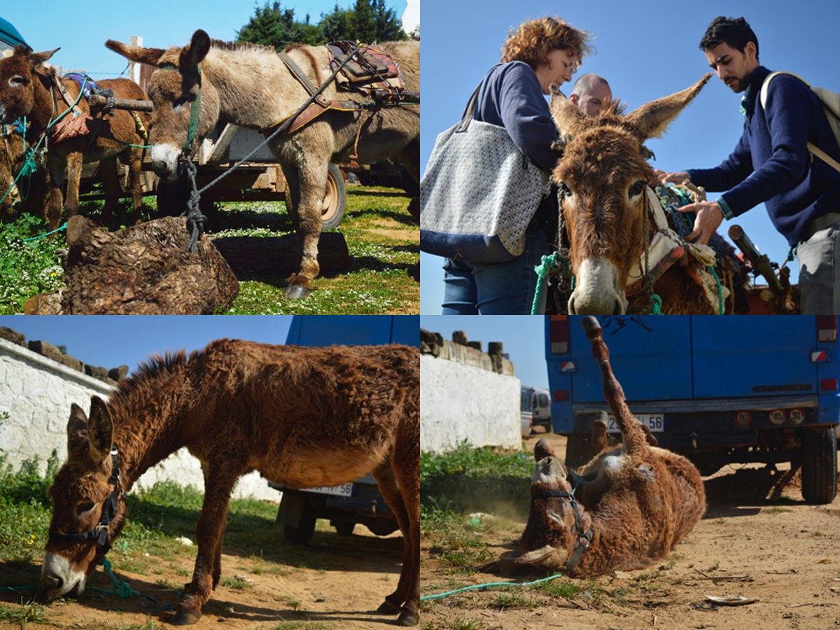 Donkey Rescue, Animal Market Morocco