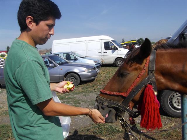 Tiermarkt Campia Turzii, Rumänien