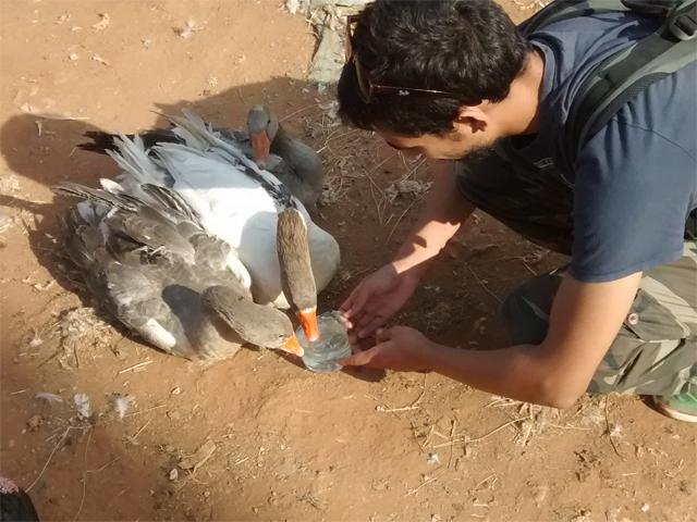 Tiermarkt Mers El Kheir, Marokko