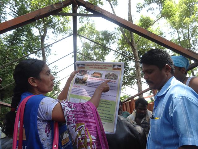 Kontrolle und Aufklärungsarbeit auf dem Tiermarkt von Thimiram, Indien