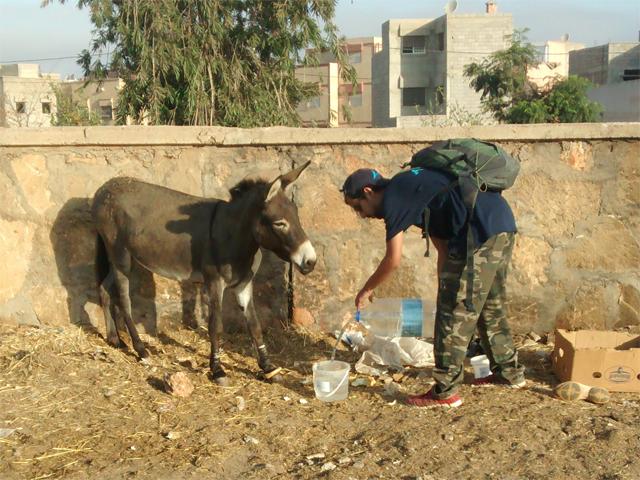 Tränkung der Esel auf dem Tiermarkt von Mers El Kheir, Marokko