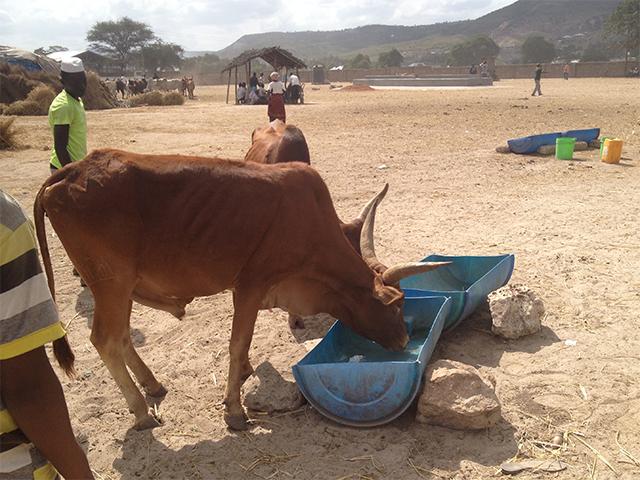 Neue Wassertröge auf dem Rindermarkt von Pugu, Tansania