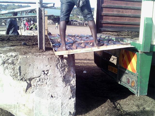 Verladerampe ohne Seitenschutz. Rindermarkt Pugu, Tansania.