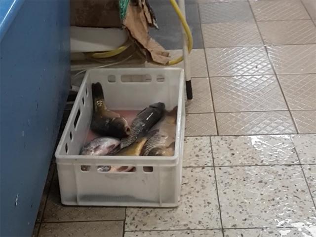 Kontrolle von Lebenfischverkäufen in Warschau