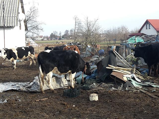 Kontrolle einer Tierhaltung in Polen