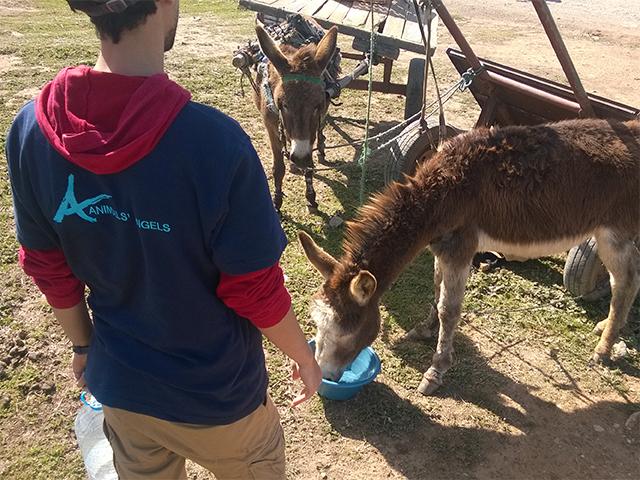 Animals' Angels auf dem Tiermarkt von Skherat, Marokko