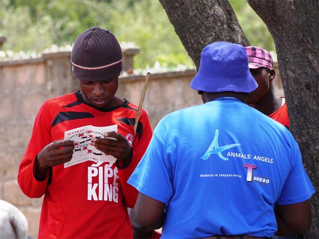 Animals' Angels kontrolliert den Rindermarkt in Pugu, Tansania