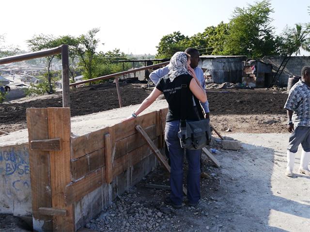 Animals' Angels kontrolliert das Schlachthaus in Dar es Salaam, Tansania