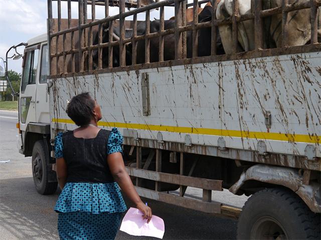 Animals' Angels kontrolliert Tiertransporte am Highway Checkpoint in Tansania