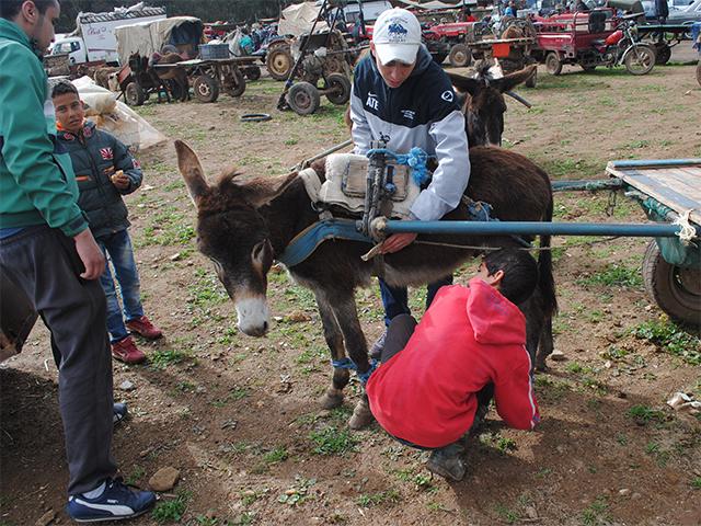 Das Animals' Angels Team hilft den Eseln und Maultieren auf dem Tiermarkt von Skherat