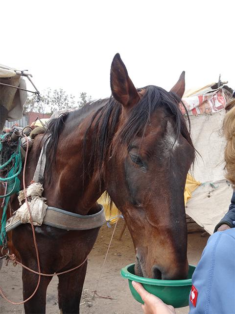 Louis, Tiermarkt Marokko