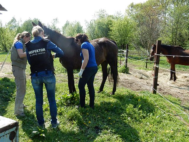 Kontrolle einer Pferdehaltung in Polen