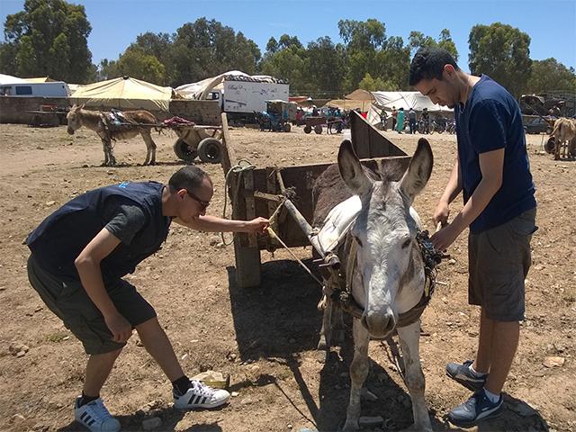 Das Animals' Angels Team auf dem Tiermarkt von Skherat, Marokko