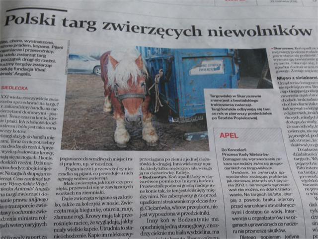 Polen Report in Zeitungen und TV