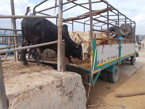 Kaputte Rampe auf dem Rindermarkt Pugu, Tansania