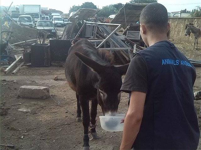 Animals' Angels im Einsatz auf dem Tiermarkt Mers El Kheir, Marokko