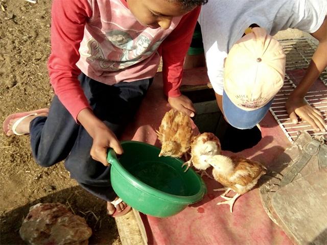 Animals' Angels auf dem Tiermarkt von Mers El Kheir, Marokko