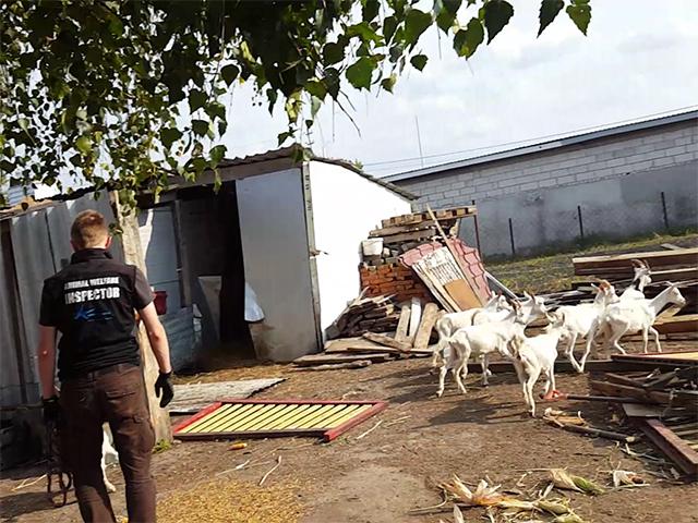 Viva! kontrolliert eine Tierhaltung in Polen