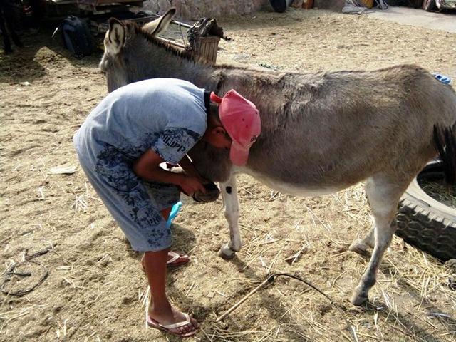 Animals' Angels Mini-Workshop auf dem Tiermarkt von Mers El Kheir, Marokko