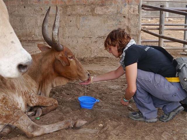 Bulle Abraham, Rindermarkt Pugu, Tansania