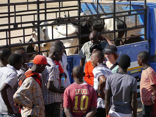Projektleiterin Sophie erklärt den Marktarbeitern einen gewaltfreien Umgang mit den Rindern während der Verladung - ohne Schlagstöcke und Tritte.