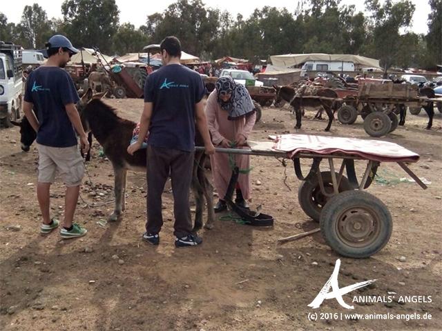 Hilfe für die Tiere in Skherat, Marokko