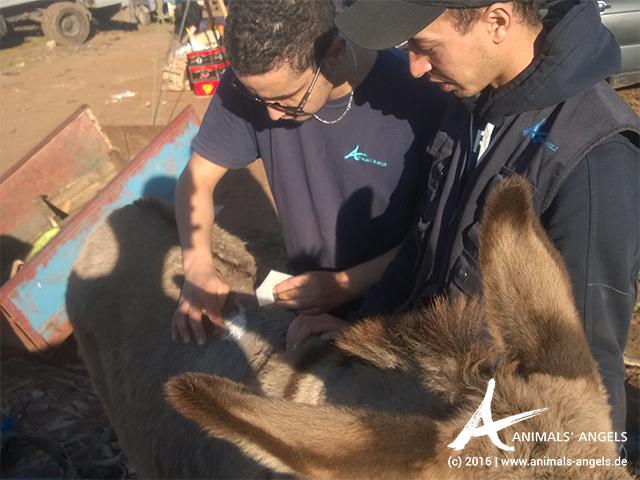 Animals' Angels im Einsatz für die Tiere in Mers El Kheir