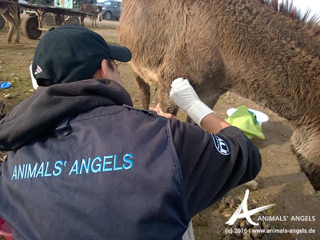 Animals' Angels im Einsatz für die Esel von Skherat