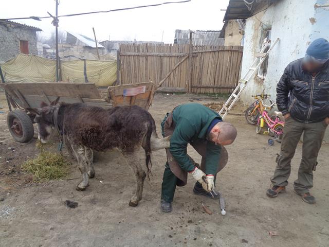 Hilfe für die Esel Marcelu und Daniel