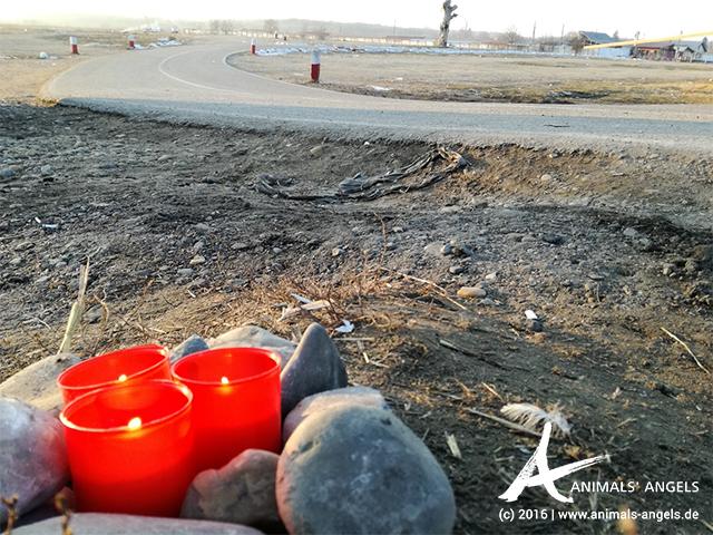 Gedenk-Kerze für die Schweine in Rumänien