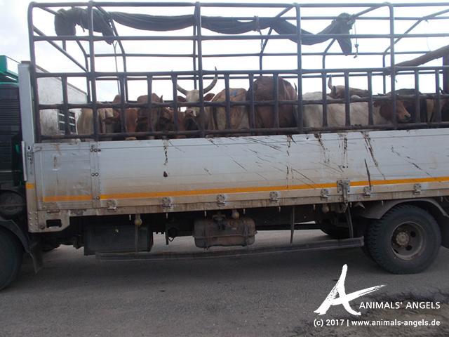 Tiertransport-Kontrollen in Tansania