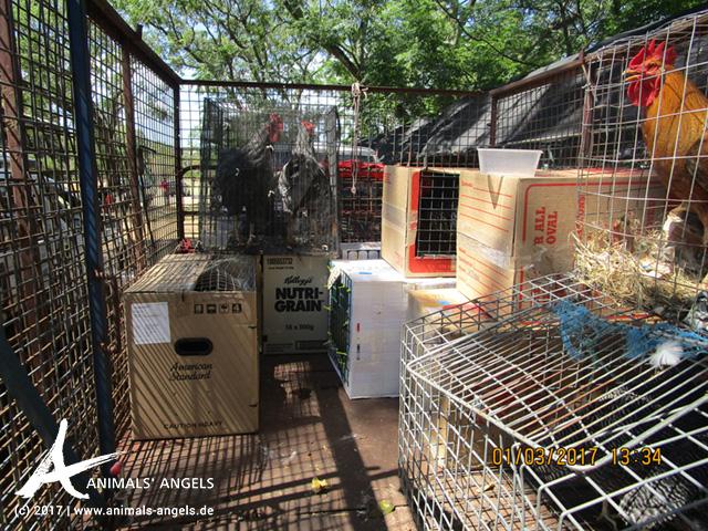 Tiermarkt Mundijong, Australien