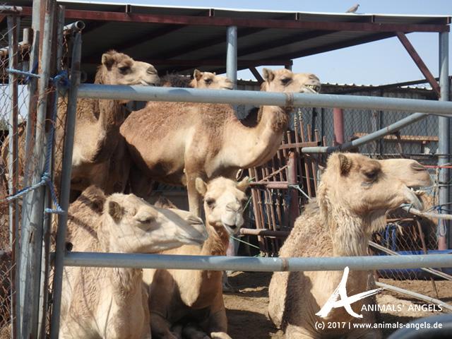 Animals' Angels Termin Umweltministerium Katar