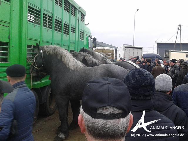 Pferdemarkt Skaryszew, Polen