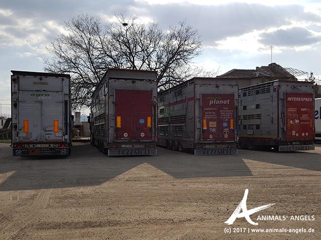 Wartende Tiertransporter an der Kontrollstelle in Svilengrad, Bulgarien