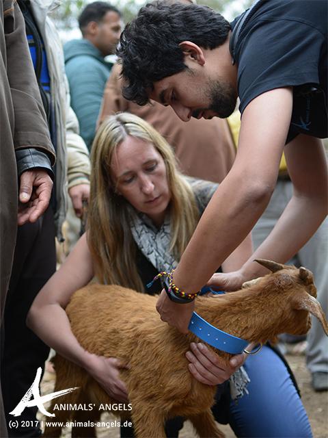 Animal Week: Halsbänder für die Schafe