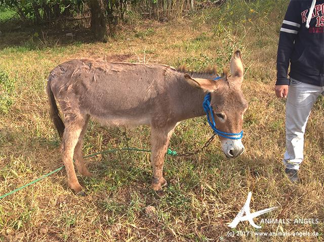 Hilfe für Esel Montasiran, Marokko