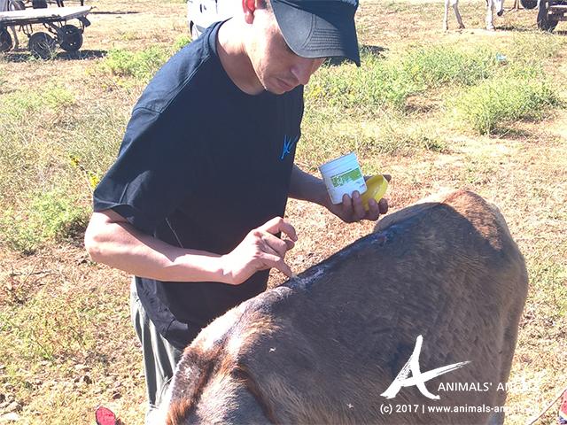 Animals' Angels im Einsatz für die Tiere auf dem Tiermarkt in Skherat
