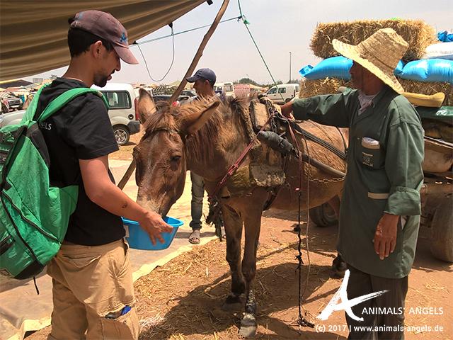 Animals' Angels im Einsatz für die Tiere in Mers El Kheir, Marokko