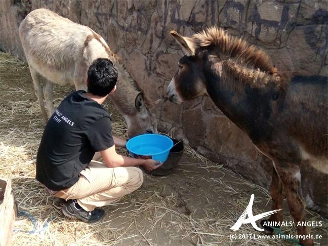 Das Animals' Angels Team tränkt die Esel auf dem Tiermarkt von Mers El Kheir, Marokko