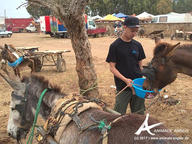 Animals' Angels im Einsatz für die Tiere in Marokko: Tiermarkt Skherat