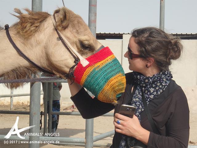 Erste Erfolge für die Tiere in Katar