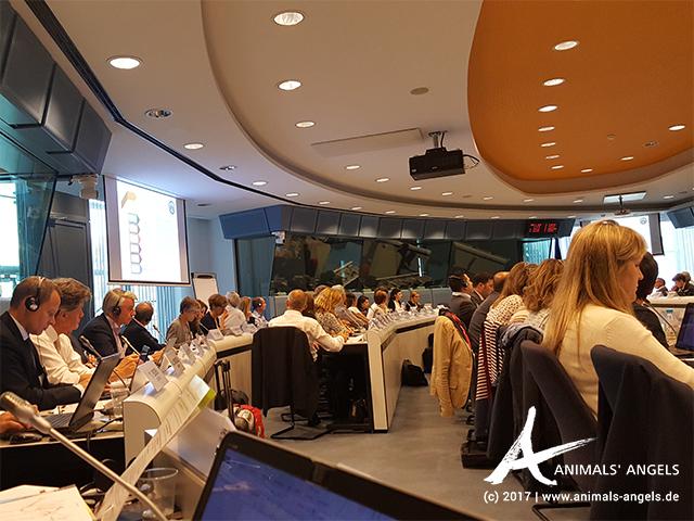 Auftaktsitzung der EU Tierschutz-Plattform in Brüssel