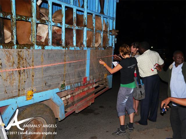 Tiertransport-Kontrollen am Kibaha Checkpoint, Tansania