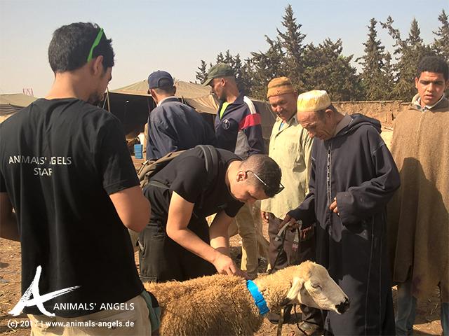 Animals' Angels im Einsatz auf dem Tiermarkt von Mers El Kheir