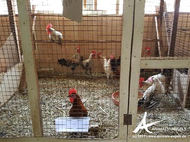 Käfige Tiermarkt Katar