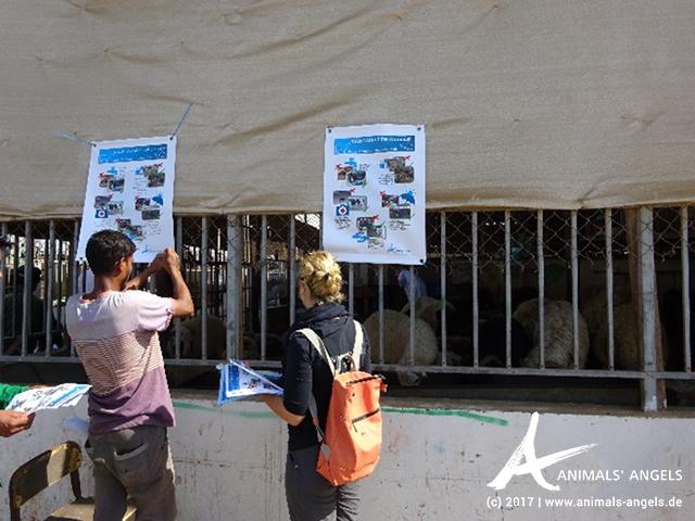 Animals' Angels bringt Aufklärungsplakate auf dem Tiermarkt von Abu Hanmour an.
