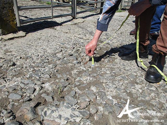 Löchriger und enebener Boden, Saleyard Killafaddy, Tasmanien